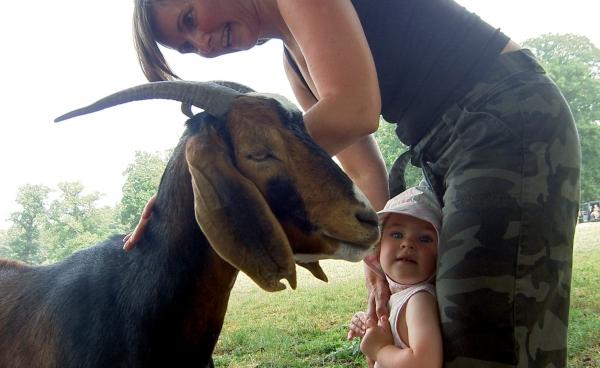 Maya i nærkontakt med ged